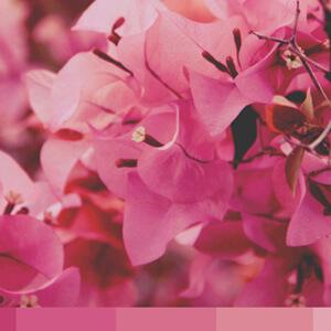 pretty pink thumbnail